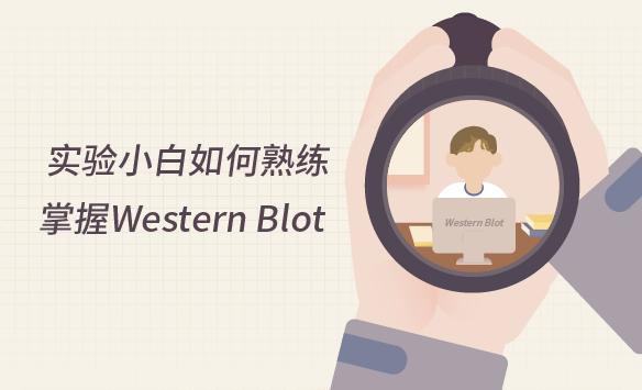 实验小白如何熟练掌握WesternBlot