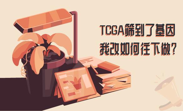TCGA筛到了基因,我该如何往下做?