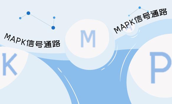 MAPK信号通路
