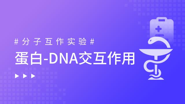 蛋白-DNA交互作用