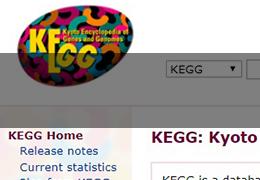 KEGG京都基因与基因组百科全书,信号通路分析中的战斗机